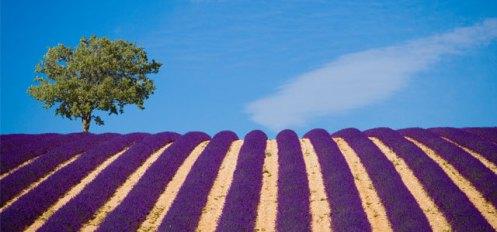 ProvenceHero2_a_1