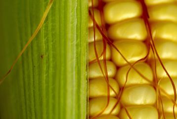corn_cu_scale